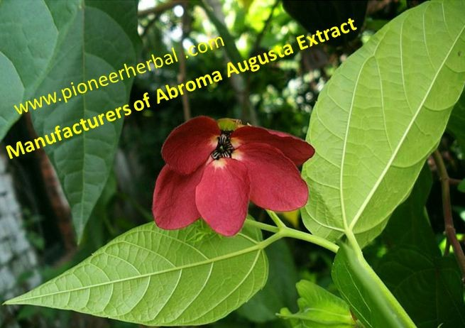 Manufacturers of Abroma Augusta Extract